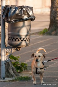 Little dog out for an afternoon stroll, Assisi