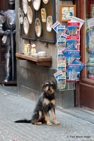 Good dog, Orvieto