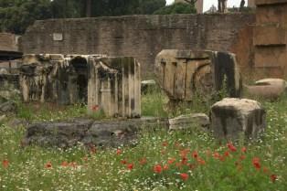 Roman ruins in the forum