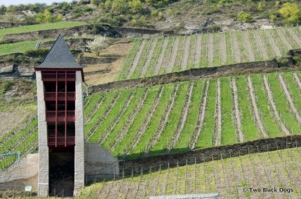 Bacharach Tower and vineyards