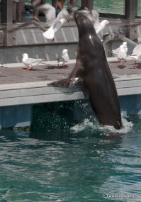 Feeding the seals at Seal Harbour