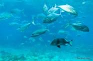 Lots of fish in Shark Bay