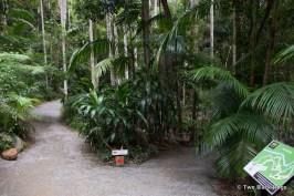 Rainforest paths, Mt Tamborine