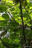 Vibrant green tree foliage