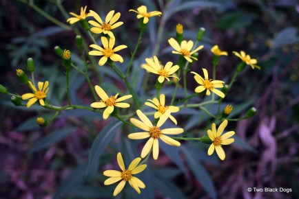 Wildflowers, Queensland hinterland