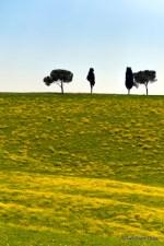 Fields of yellow, Tuscany