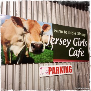 Jersey Girls Cafe is perfect for the lactose tolerant. Tasty cheese, ice cream and the best tasting milk shake I've had in ages.