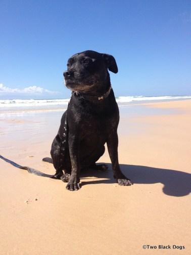Bundy the dog at Pippi beach, Yamba