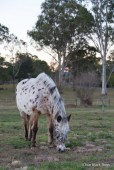 Cody the horse