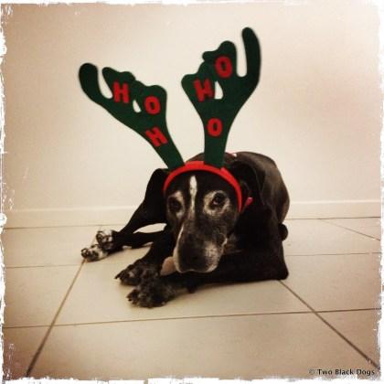 Ho Ho Ho Maxi the reindeer