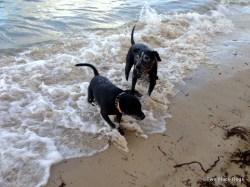 Bundy and Maxi enjoying a swim