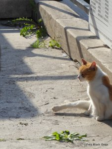 One of the many cats looked after by volunteers at the cat sanctuary housed in the ruins of Largo di Torre Argentina