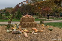 Autumn harvest display in Jardin des Plantes