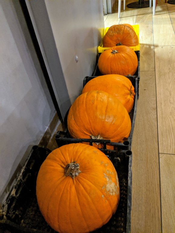 Pumpkins in a row