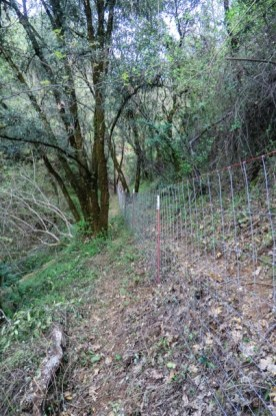 woven wire livestock fence through steep, forested terrain