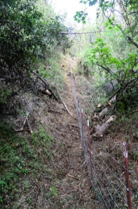 woven wire livestock fence going up very steep, forested terrain