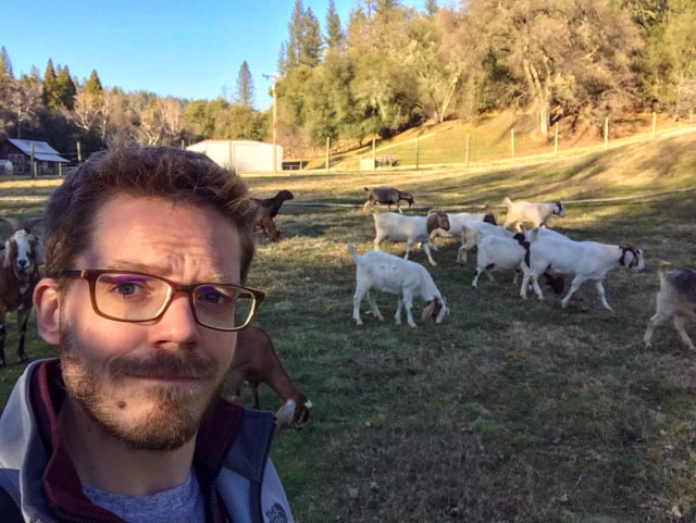 man standing in field with a lot of goats