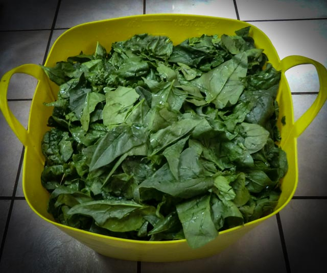 a yellow container full of spinach leaves
