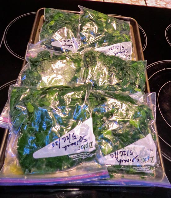 six quarts of steamed spinach in zip lock bags reading for freezer