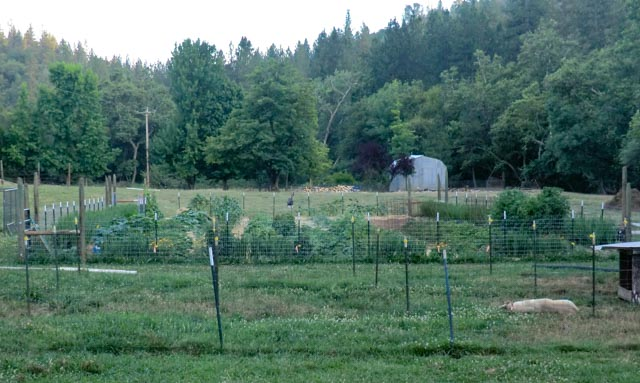 A very verdant, green garden with lots of abundant rows