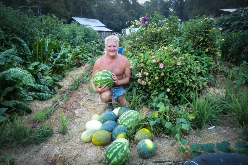 A tan, man in cuttoff shorts with a mullet in a very lush, green garden surrounded by plants and with watermelon and canteloupe in the foreground