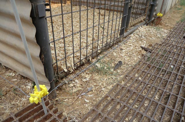 electric fence wire near the bottom of a kennel