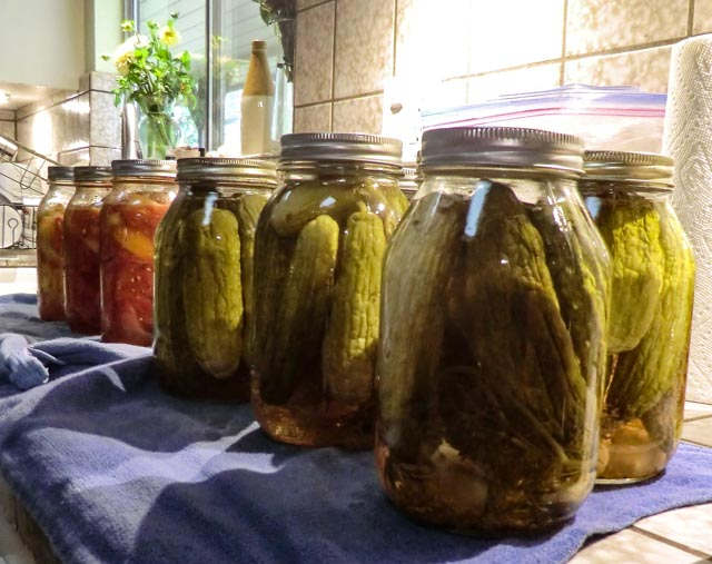 quart jars of preserved pickles and tomatoes