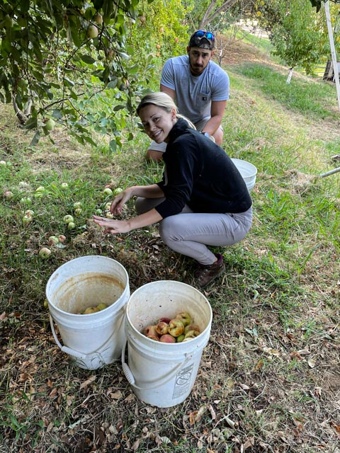 two people picking up apples