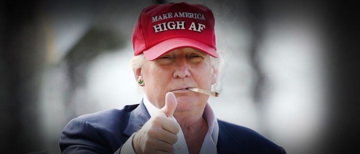 trump-may-back-cannabis-legalization-votes-1