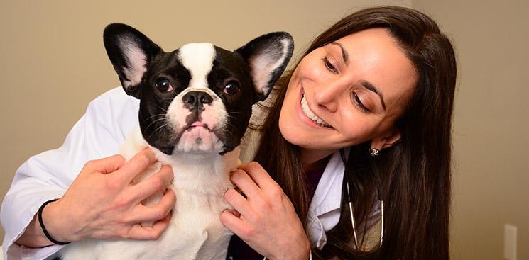 Merrick Veterinarian | East Bay Veterinary Hospital