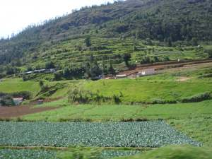 a hillside in Ooty, India