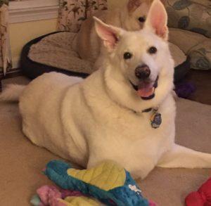Yuki, the happiest dog I've ever known