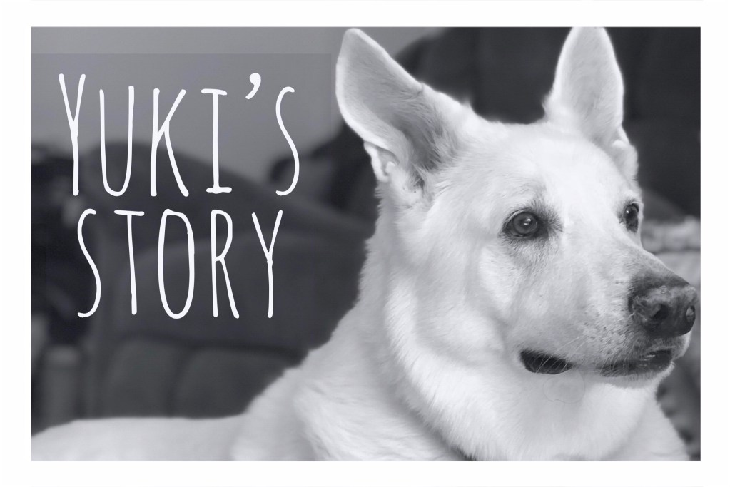 Yuki's Story Continues: From Bad to Worse