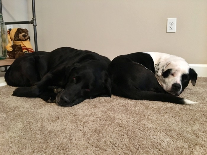 Bailey snuggles with Naya after her diagnosis of laryngeal paralysis