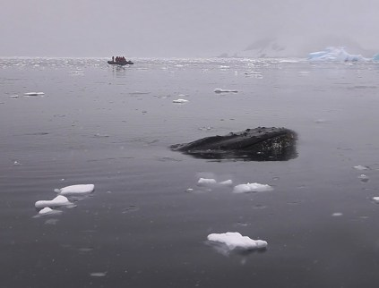 Our first ever close encounter with a humpback whale. There are no words.
