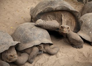 Two for the Road: Our Galapagos Adventure