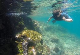 Meet Our Sponsor, And Win an Adventure to the Galapagos Islands!