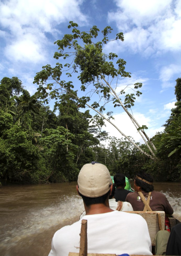 A view from the canoe as we travel down the Shiripuno. The trees are something else! Beautiful.
