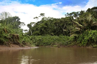 The beautiful Amazon rain forest.