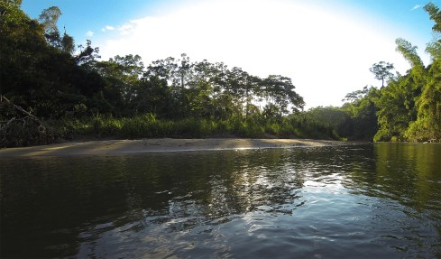The Shiripuno River of eastern Ecuador.