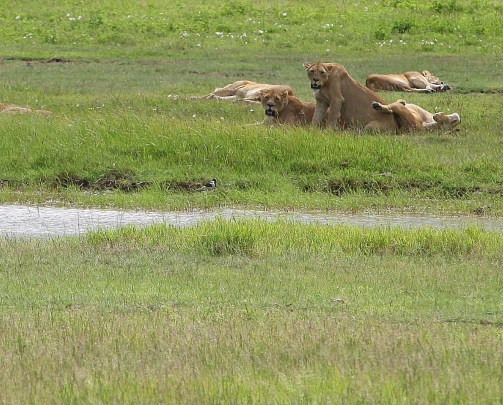 Two for the Road: Safari in Ngorongoro Crater