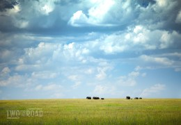 TFTR Photo of the Day: Elephants Crossing the Serengeti Plain
