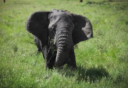 Ten Fascinating Facts About Elephants (and Our Favorite Photos)
