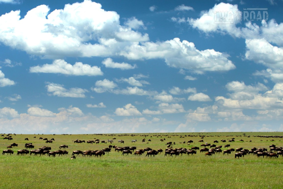 Two for the Road Photo of the Day: Wildebeest on the Serengeti