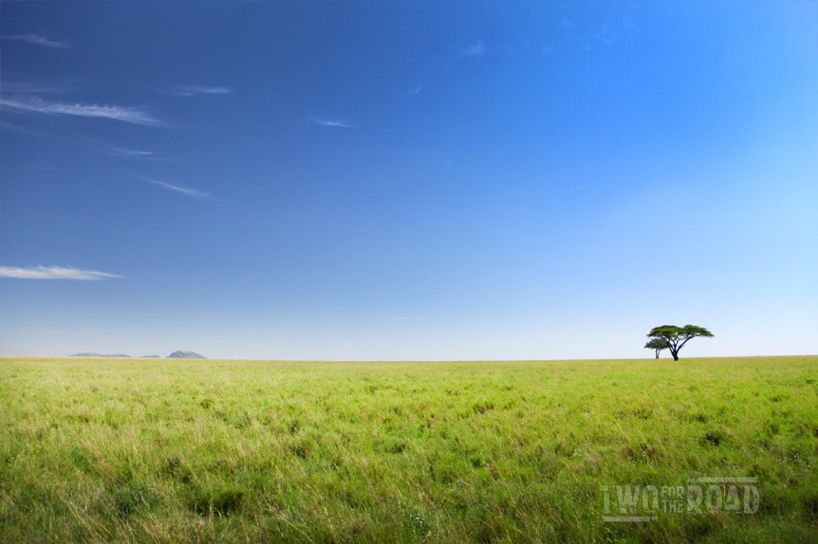Photo of the Day: the Endless Serengeti Plain
