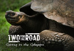 VIDEO: Getting to the Galapagos: A Day of Madness and Magic