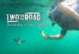 VIDEO: Snorkeling in the Galapagos with Penguins… and Sharks!