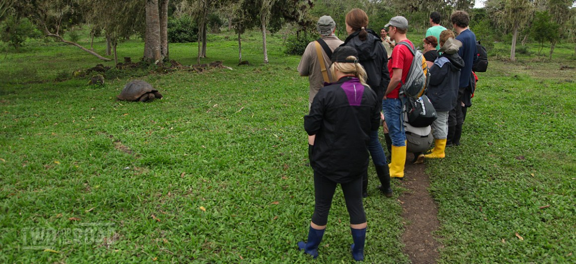 Our group admires a Galapagos tortoise from a respectful distance.