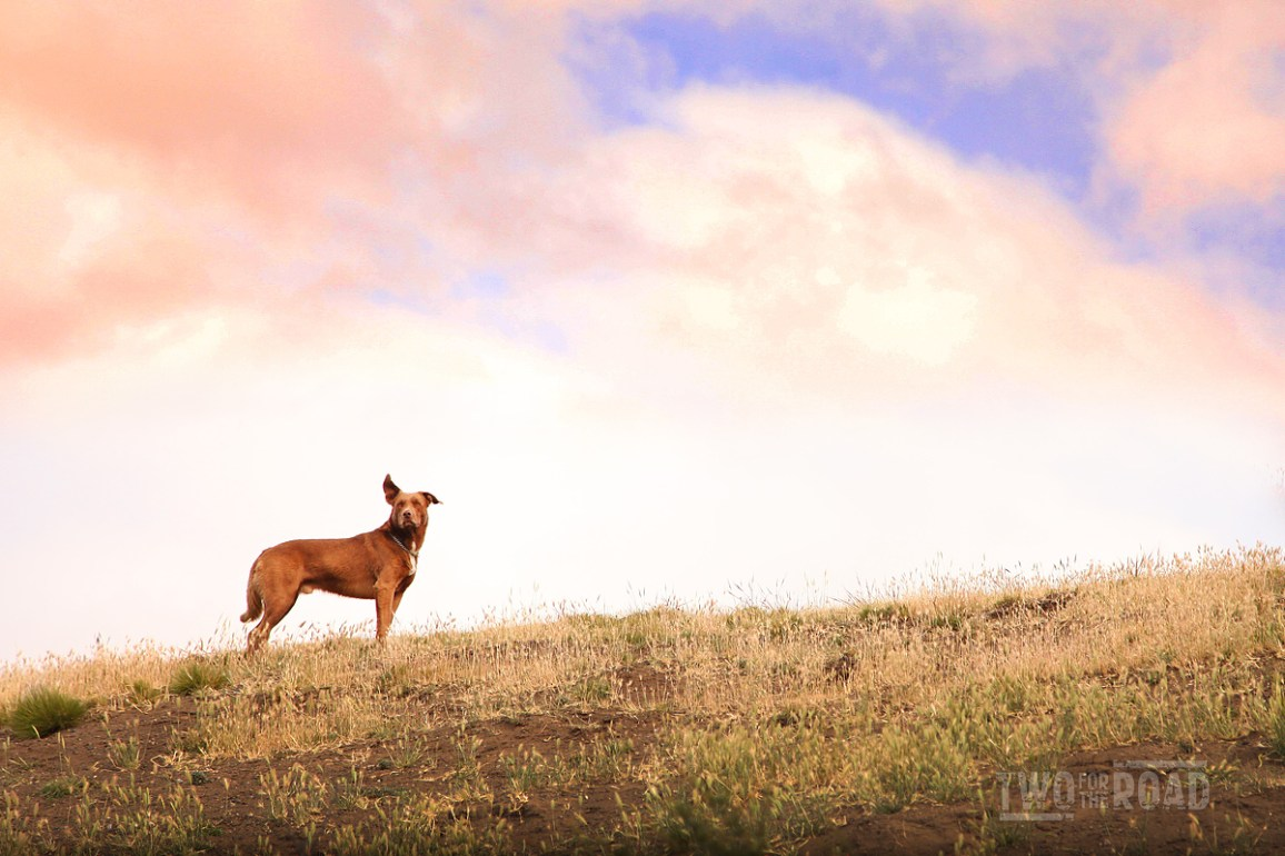 Two for the Road Photo of the Day: Guarding the Flock in Patagonia
