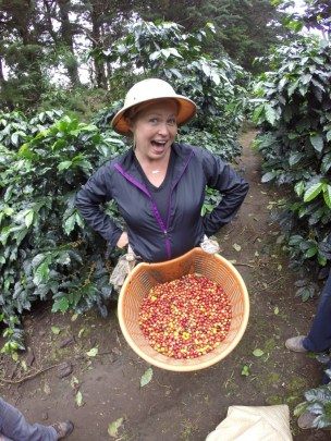 Picking coffee beans! In Boquete, Panama.